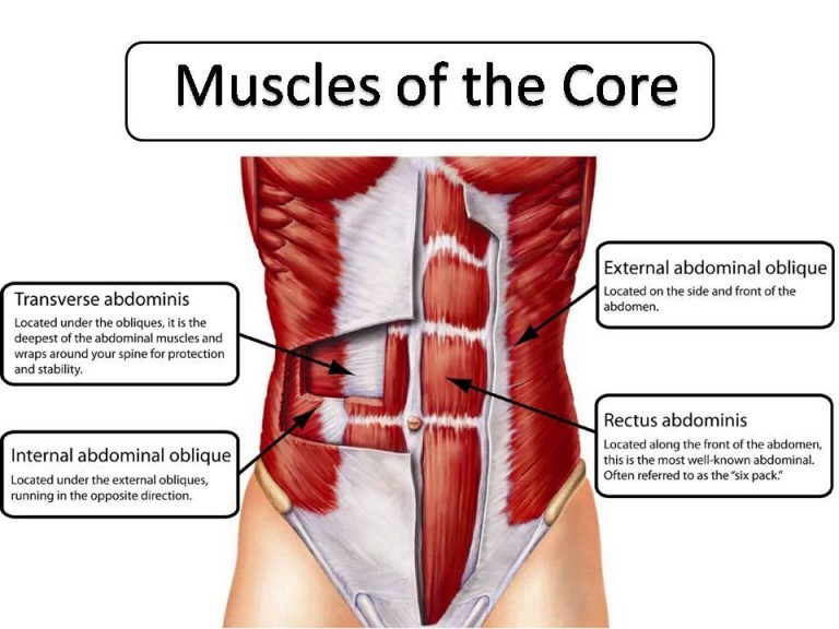 muscles-of-the-core-768x576